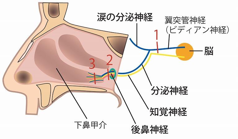 手術の変遷